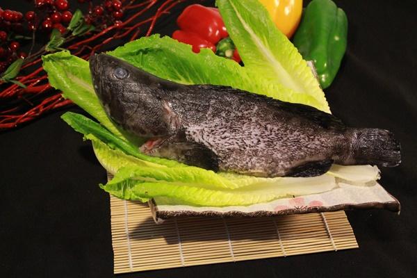 石斑魚 1