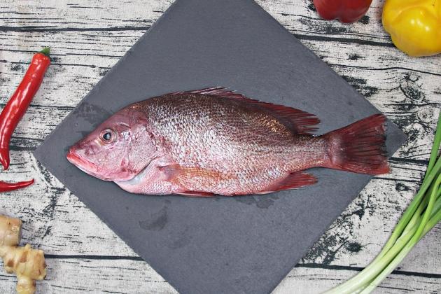 赤海魚 1
