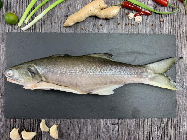 午仔魚 1